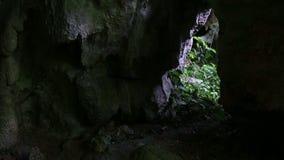 Сцена укладки в форме пещеры Центральной Америки джунглей сползая видеоматериал