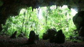 Сцена укладки в форме пещеры Центральной Америки джунглей сползая акции видеоматериалы