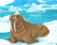 Сцена шаржа - ледовитые животные - морж Стоковые Изображения RF