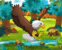 Сцена шаржа - одичалые животные Америки - орел - енот Стоковое фото RF
