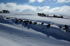 Сцена Snowy около Allendale, Нортумберленда, Англии Стоковые Фото