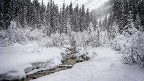 Сцена Snowy стоковые фото