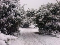 Сцена Snowy Стоковые Изображения