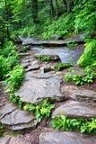 Сцены вдоль аппалачского следа в больших закоптелых горах Стоковые Фото