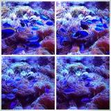 Сцены от аквариума Стоковые Изображения