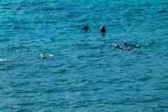 Сцены от запаса острова козы морского, северного острова, Окленд, Стоковые Фото