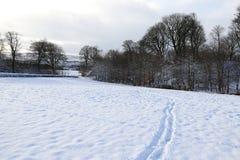 Сцены снега Стоковые Фотографии RF