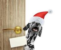 Счастливая далматинская собака в красной шляпе Санта Клауса рождества смотря вне вход двери дома с пустой карточкой Изолированный Стоковое фото RF
