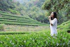 Счастливая девушка красоты в поле чая колодца дракона Longjing в Ханчжоу Стоковые Фотографии RF
