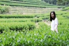 Счастливая девушка красоты в поле чая колодца дракона Longjing в Ханчжоу Стоковое фото RF
