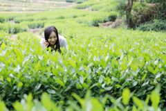 Счастливая девушка красоты в поле чая колодца дракона Longjing в Ханчжоу Стоковые Изображения