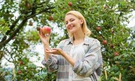 Счастливая женщина есть Яблоко сад, девушка садовника в саде яблока витамин и dieting еда здоровые зубы голод стоковое изображение rf