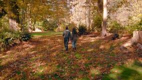 Счастливая молодая пара в любов идя через красивый лес осени держа руки сток-видео