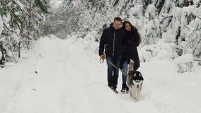 Счастливая пожененная пара находясь в сосновом лесе зимы идет с лайкой красивой черно-боли сибирской Они успокоены акции видеоматериалы