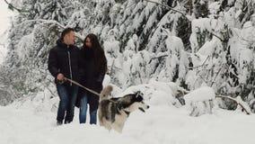 Счастливая пожененная пара находясь в сосновом лесе зимы идет с лайкой красивой черно-боли сибирской Они успокоены видеоматериал
