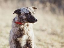 Счастливая принятая бездомная собака, принимает не ходит по магазинам стоковые фото