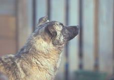 Счастливая принятая бездомная собака, принимает не ходит по магазинам стоковое изображение