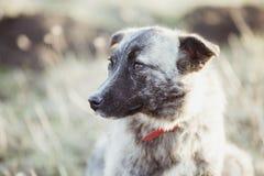 Счастливая принятая бездомная собака, принимает не ходит по магазинам стоковое фото