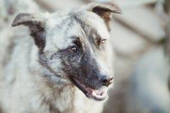 Счастливая принятая бездомная собака, принимает не ходит по магазинам стоковое фото rf