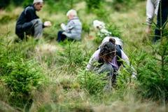 Счастливая семья собирая одичалые ягоды в лесе Стоковая Фотография RF