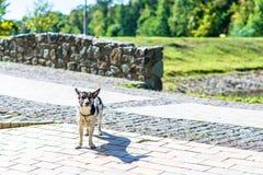 Счастливая собака в парке Стоковое Фото