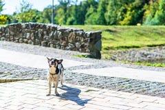 Счастливая собака в парке Стоковая Фотография RF