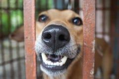 Счастливая собака засовывая нос вне от клетки цирка стоковое изображение rf