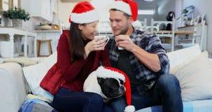 Счастливая собака пар и мопса при шляпа santa имея кофе 4k сток-видео