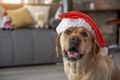 Счастливая собака празднуя Новый Год Стоковая Фотография RF