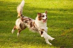 Счастливая собака Стоковые Фотографии RF
