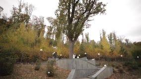 Счастливая стойка пар свадьбы перед большим деревом Предпосылка леса сток-видео