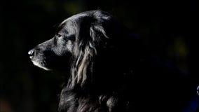 Счастливая черная собака в парке Volkspark Rehberge ` s людей в Берлин-свадьбе, Германии видеоматериал