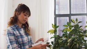 Счастливое азиатское комнатное растение чистки женщины дома акции видеоматериалы