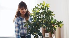 Счастливое азиатское комнатное растение чистки женщины дома сток-видео