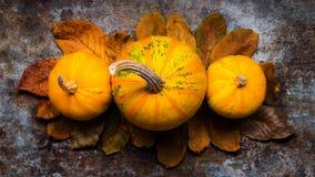 счастливое благодарение Тыквы и упаденные листья на темной ретро предпосылке Осень и сезонные украшения Стоковые Фотографии RF