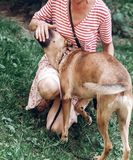 Счастливое женское предприниматель играя с собакой outdoors, напористое biti собаки стоковые фотографии rf