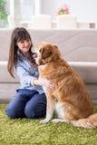 Счастливое предприниматель собаки женщины дома с золотым retriever стоковое фото rf