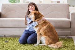 Счастливое предприниматель собаки женщины дома с золотым retriever стоковые фото