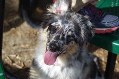 Счастливое собачье стоковые изображения rf
