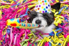 Счастливое celberation собаки Нового Года Стоковое Изображение