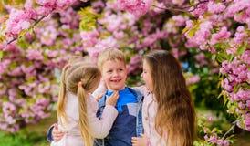 Счастливые каникулы весны Потерянный в цветении Девушки и парни представляя около Сакуры Дети на розовых цветках дерева Сакуры стоковое изображение rf