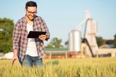 Счастливые молодые фермер или agronomist проверяя заводы пшеницы в поле, работая на планшете стоковые фотографии rf