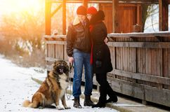 Счастливые пары с собаками в моментах леса зимы симпатичных внешних стоковое изображение