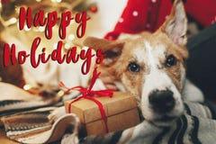 Счастливые праздники отправляют СМС, приветствия сезонов, милый щенок сидя на cr стоковые изображения
