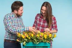 Счастливые тюльпаны отладки флористов в большой деревянной коробке на голубой предпосылке стоковая фотография rf