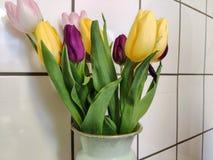 Счастливые тюльпаны стоковое фото