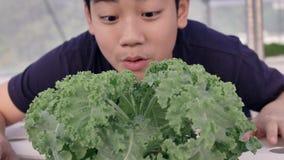 Счастливый азиатский мальчик с зеленым салатом для здорового питания, выражать счастливый для еды овощей сток-видео