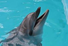 Счастливый купать солнца дельфина Стоковая Фотография RF