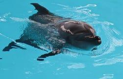 Счастливый купать солнца дельфина Стоковое Изображение RF