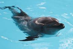 Счастливый купать солнца дельфина Стоковое Фото